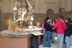 Museo Ciencias Naturales (1)