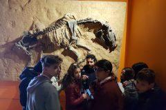 Museo Ciencias Naturales (12)