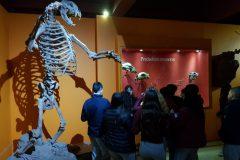 Museo Ciencias Naturales (14)