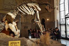 Museo Ciencias Naturales (15)