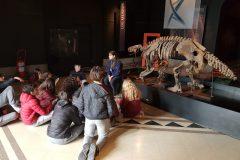 Museo Ciencias Naturales (16)