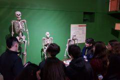 Museo Ciencias Naturales (18)