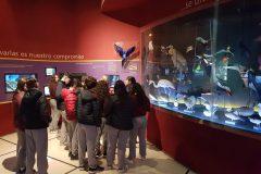 Museo Ciencias Naturales (19)