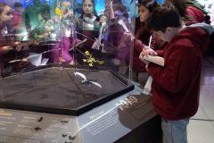 Museo Ciencias Naturales (4)