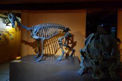 Museo Ciencias Naturales (7)